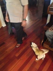 Their very cute dog is very friendly, and brings joy!